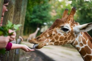 Event venue with live animals at Riverbanks Zoon in Columbia, South Carolina