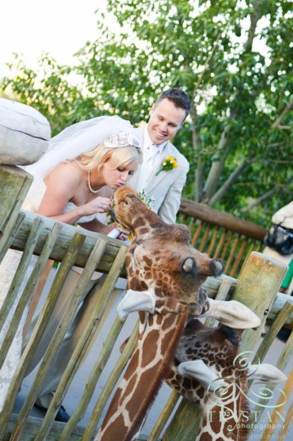 Bride kisses giraffe at zoo wedding venue in Columbia, South Carolina