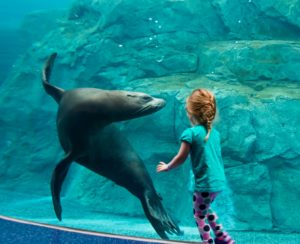 Columbia's most unique and exotic party venue features sea lions