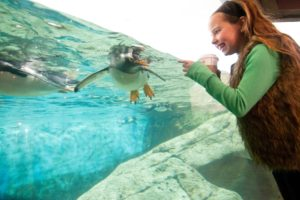 Interact with water animals at the most unique Corporate event venue in Columbia, SC