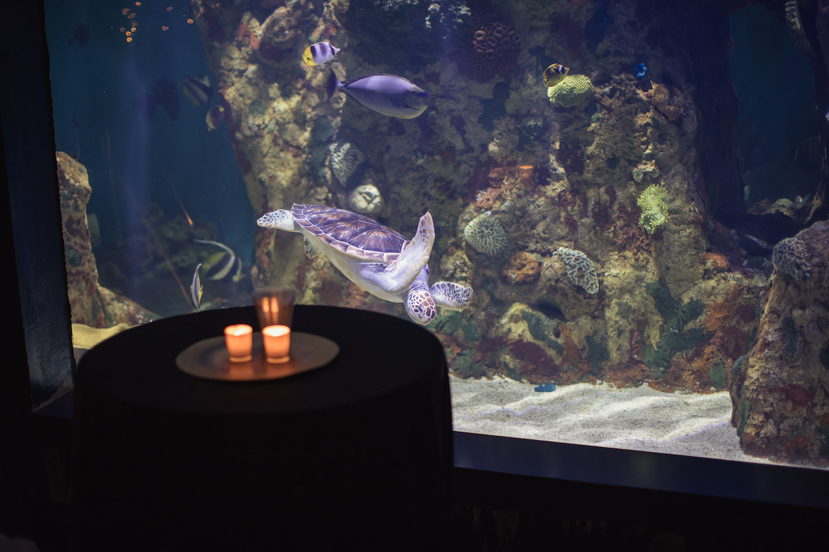 The A.R.C. - Aquarium Reptile Center makes for a uniquely beautiful event venue in Columbia, SC